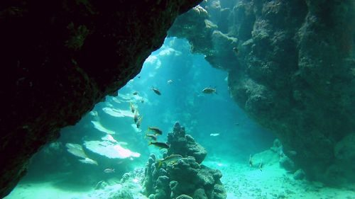 Korallen Canyon
