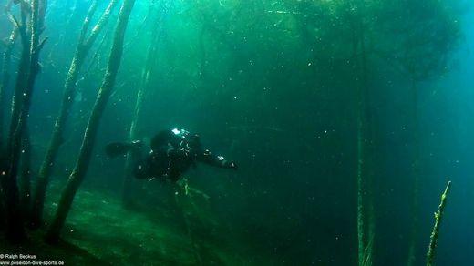 Taucher im Unterwasserwald Kreidesee Hemmoor