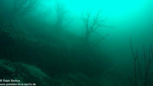 Unterwasserwald Kreidesee